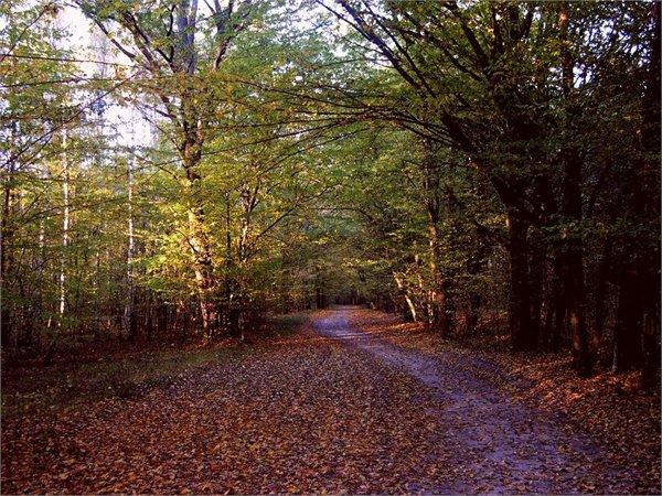 פארק לאומי Polesie