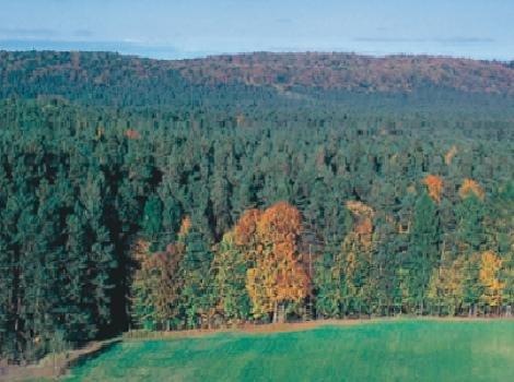 פארק לאומי Roztocze