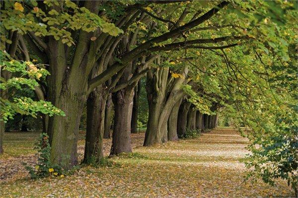 גן בוטנ ב Lodz